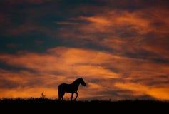Paisaje de la puesta del sol con el caballo y colores hermosos Foto de archivo
