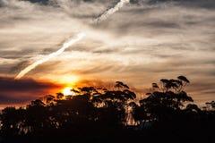 Paisaje de la puesta del sol con la vegetación costera Imagen de archivo
