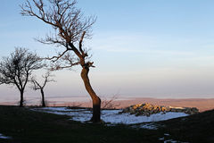 Paisaje de la puesta del sol de los árboles del invierno Foto de archivo