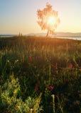 Paisaje de la puesta del sol del verano Foto de archivo