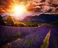 Paisaje de la puesta del sol del verano del campo de la lavanda Foto de archivo libre de regalías