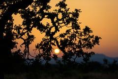 Paisaje de la puesta del sol en Mallorca Fotos de archivo libres de regalías