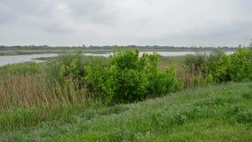 Paisaje de la reserva de naturaleza en un día lluvioso almacen de metraje de vídeo