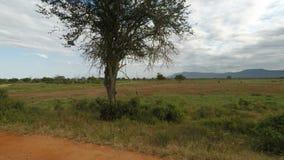 Paisaje de la sabana en Kenia metrajes
