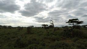 Paisaje de la sabana en Kenia almacen de video