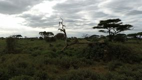 Paisaje de la sabana en Kenia almacen de metraje de vídeo