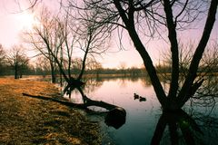 Paisaje de la salida del sol con el lago y los patos azules imágenes de archivo libres de regalías