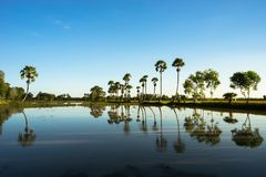 Paisaje de la salida del sol con las palmeras del azúcar en el campo de arroz por mañana Delta del Mekong, Chau doc., An Giang, V imágenes de archivo libres de regalías