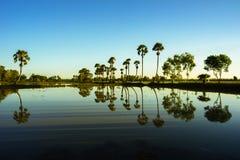 Paisaje de la salida del sol con las palmeras del azúcar en el campo de arroz por mañana Delta del Mekong, Chau doc., An Giang, V imagenes de archivo