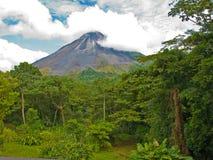 Paisaje de la selva Imagen de archivo