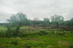 Paisaje de la tala de árboles de un bosque natural, del contraste de la vida y de la muerte de la flora y de la fauna foto de archivo libre de regalías