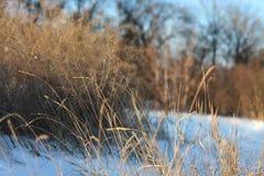 Paisaje de la tarde del invierno Imagen de archivo libre de regalías
