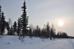 Paisaje de la tarde del invierno con nieve, el bosque y el sol frío Ocaso escarchado Fotos de archivo libres de regalías