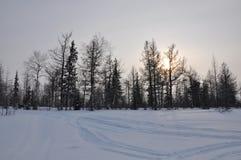 Paisaje de la tarde del invierno con nieve, el bosque y el sol frío Ocaso escarchado Foto de archivo libre de regalías