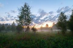 Paisaje de la tarde en un campo salvaje Fotografía de archivo libre de regalías
