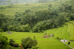 Paisaje de la terraza del campo del arroz en bali Indonesia foto de archivo libre de regalías