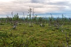 Paisaje de la tundra en la puesta del sol, Finnmark, Noruega Imágenes de archivo libres de regalías