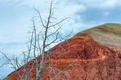 Paisaje de la unidad de la roca de John Day Fossil Beds Sheep Fotografía de archivo
