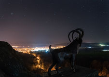 Paisaje de la vía láctea con las ovejas Cielo nocturno hermoso sobre Bulgaria europa Fotos de archivo