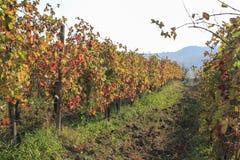 Paisaje de las colinas usadas para producir el vino fotos de archivo