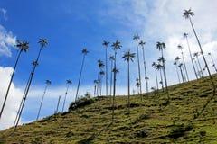 Paisaje de las palmeras de la cera en el valle de Cocora cerca de Salento, Colombia Fotos de archivo