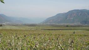 Paisaje de las plantaciones de la fruta en Trentino Alto Adige, Italia El tiempo de primavera… subió las hojas, fondo natural Pai almacen de metraje de vídeo