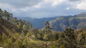 Paisaje de las plantaciones de té de montañas, timelapse de Sri Lanka almacen de metraje de vídeo