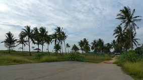 Paisaje de los árboles de coco Imagen de archivo libre de regalías