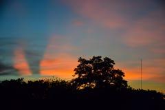 Paisaje de los árboles de la silueta y de los cielos tropicales hermosos imagen de archivo libre de regalías