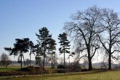 Paisaje de los árboles del invierno Foto de archivo libre de regalías