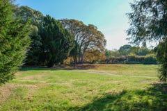Paisaje de los árboles y del prado del otoño Fotografía de archivo libre de regalías