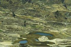 Paisaje de los Andes en Perú Imagen de archivo libre de regalías