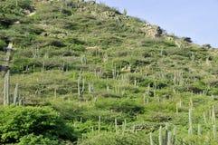 Paisaje de los cactus Fotografía de archivo libre de regalías