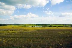 Paisaje de los campos amarillos y del cielo azul, oblast de Tulskaya, Rusia Fotografía de archivo libre de regalías