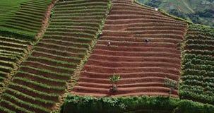 Paisaje de los campos colgantes de los puerros almacen de metraje de vídeo