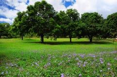 Paisaje de los árboles del verano Fotografía de archivo