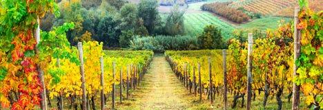 Paisaje de los viñedos del otoño Italia, Toscana imágenes de archivo libres de regalías