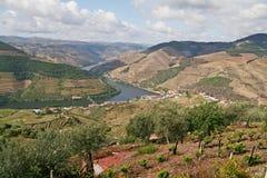 Paisaje de los viñedos del vino de Oporto Foto de archivo