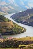 Paisaje de los viñedos del vino portuario Foto de archivo