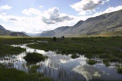 Paisaje de Mauntain con los caballos y el cielo nublado imagen de archivo libre de regalías