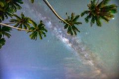 Paisaje de medianoche con la silueta de la palmera del coco y vía láctea en el cielo Foto de archivo libre de regalías