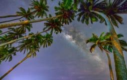 Paisaje de medianoche con la silueta de la palmera del coco y vía láctea en el cielo Fotografía de archivo libre de regalías