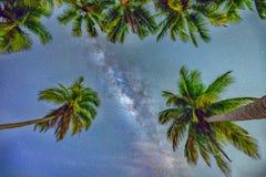Paisaje de medianoche con la silueta de la palmera del coco y vía láctea en el cielo Imagen de archivo libre de regalías