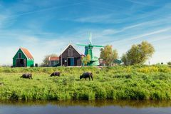 Paisaje de molinoes de viento y de la granja holandeses tradicionales cerca de Amsterdam Foto de archivo libre de regalías