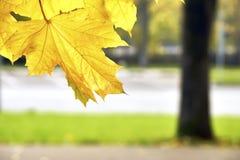 Paisaje de Moscú del otoño Imágenes de archivo libres de regalías