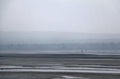 Paisaje de niebla con el lago y los pájaros Imagenes de archivo