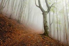 Paisaje de niebla del bosque de la mañana mística Foto de archivo