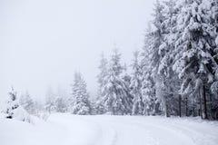 Paisaje de niebla del invierno con los abetos Foto de archivo