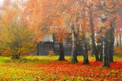 Paisaje de niebla del otoño - casa de madera entre los árboles amarilleados Imágenes de archivo libres de regalías