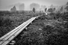 Paisaje de niebla en área sueca del pantano Foto de archivo